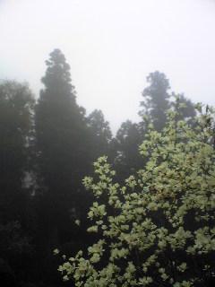 宮城県涌谷町箟岳山山頂の今朝の画像です。