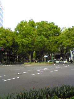 仙台市青葉区の定禅寺通りのけやき並木の画像です。