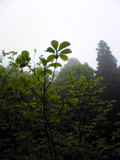 今朝の宮城県涌谷町箟岳山山頂の様子です。