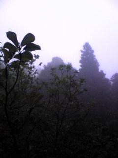 宮城県涌谷町箟岳山は今朝も霧が立ち込めております。