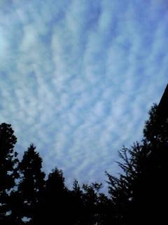 昨日の朝撮影した箟岳山上空の『うろこ雲』です。
