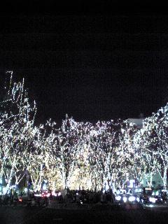 仙台市の定禅寺通りで撮影した『SENDAI光のページェント』の様子です。