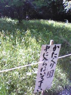 今日の箟峯寺境内かたくり園の様子です。